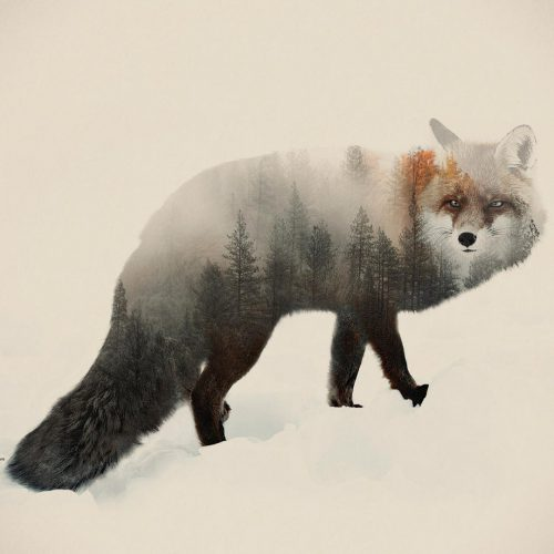 Double Exposure Animal & Landscape Portraits